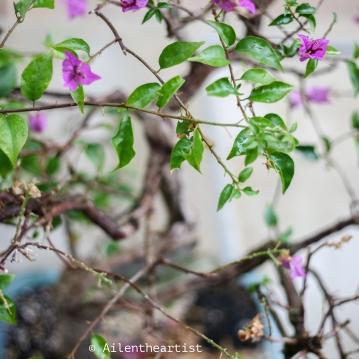 garden_-6
